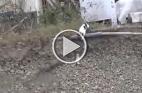 فيديو قطة تنقذ طفلها يثير الإعجاب والجدل