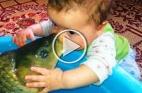 طفل يتبادل القبلات مع سمكة شاهدوا الفيديو