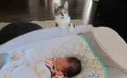 أظرف ردة فعل لقطة تفاجأت بقدوم المولود الجديد إلى المنزل