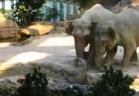 بالفيديو.. مشاهدو يوتيوب يعربون عن دهشتهم لتصرف فيلة