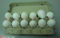 نصائح لتحضير وجبات من البيض في فصل الصيف مقدمة من مجلس تربية الدواجن