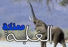 مملكة الغابة - الفيلة
