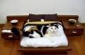 زينوا منازلكم بأثاث خاص للقطط