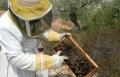 مربي النحل معدي: للنحل الهام كما البشر