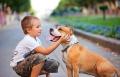 بحث: الحيوانات الأليفة تساعد في التغلب على الإجهاد