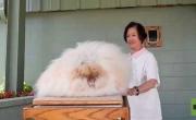 معرض سانتا كروز: أرانب فريدة طويلة الشعر
