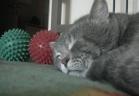 """قطة تتفاعل مع """"السُعال"""" بصوت """"بطّة"""" وتحصد مليوني مشاهدة"""