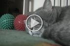 """قطة تتفاعل مع """"السعال"""" بصوت """"بطة"""""""