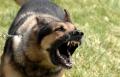 مستشفى صفد : وصول 25 شخصا من الجليل بعد لمسهم كلب مريض  بداء الكلب