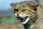 وثائقي القطط البرية