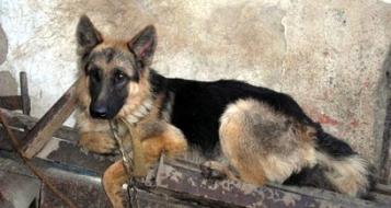مطالبة بالسجن الفعلي بحق رجل أدين بتعذيب كلب !
