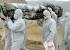 وفاة سابع طبيب في سيراليون بالإيبولا