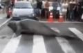 شاهد..فقمة توقف المرور بشارع بالبرازيل