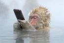 اي من الصور ستفوز بمسايقة الحياة البرية 2014