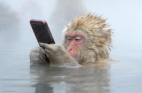 اي من هذه الصور ستفوز بمسايقة الحياة البرية 2014