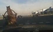 حصان يصدم سيارة على اشارة المرور