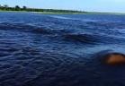 عملاق مائي يدافع عن المنطقة الخاضعة لنفوذه