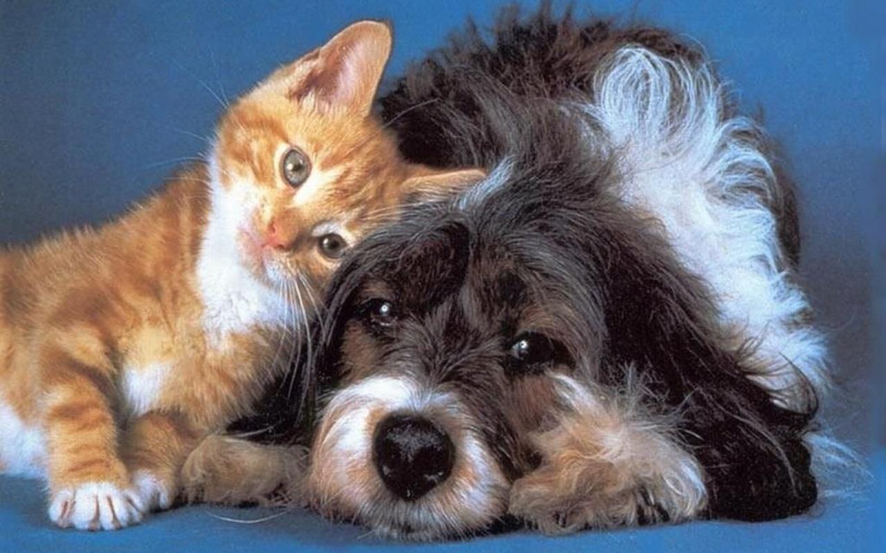 منذ متى و القطط تتصالح مع الكلاب؟ 05491f3a67f6eb8b1e8bc46226df4d7ea