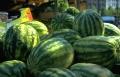الأردن يوقف بيع البطيخ