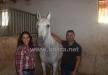 ام الفحم : اسطبل عين الجمال للخيول يحقق انجازلات وبطولات