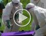 """علماء: قد تكون الخفافيش مسببة لـ""""إيبولا"""""""