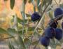إيطاليا تحذر من استخدام أغصان الزيتون بعيد الشعانين