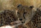 حيوانات افريقيا الفتاكه