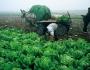 للمزارعين: اتبعوا الارشادات لتخفيف أضرار المنخفض الجوي