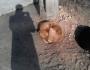 400 الف شيكل لمكافحة الكلاب السائبة في كريات اربع