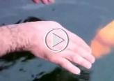 شاهدوا: صداقة بين انسان وسمكة