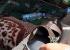 بالصور: الكشف عن أحذية مفخخة داخل أحد المساجد في صنعاء