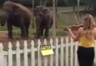 بالفيديو : رقص فيلين على مقطوعة ليوهان باخ...