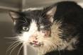 قط زومبي نفق ثم عثر عليه حيا بعد دفنه بخمسة أيام