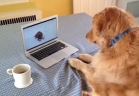 كلب يتفاعل مع نظيره على يوتيوب