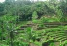 10 أسباب لزيارة جزيرة بالي