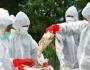 تطورات انفلونزا الطيور: تنسيق العمل بين اسرائيل وفلسطين