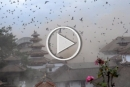 زلزال نيبال: فيديو يرصد اللحظات الأولى، قتلى ودمار هائل