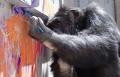 عندما يعاني الشمبانزي، يبدع