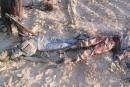الجيش  المصري ينشر صور جثث الإرهابيين في سيناء
