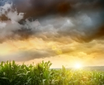 بعد موجة الحر: انخفاض غدًا على درجات الحرارة