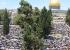 رغم التضييقات: 200 الف مصل في الاقصى في الجمعة الثالثة من رمضان