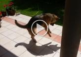 رد فعل كلب يرى ظله لأول مرة