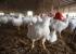 انفلونزا الطيور: اكتشاف حالة جديدة قرب غزة