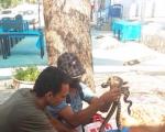 العثور على 3 أفاعي بسيارة شاب من دير حنّا!