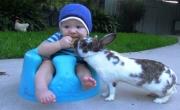 فيديو: أرنب يسرق قطعة بسكويت من طفل رضيع
