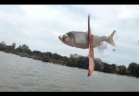 شاهد فيديو صيادون يصطادون السمك بطريقة غريبة