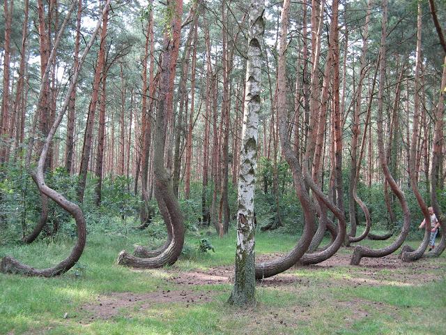 غابة العجائب في بولندا 400 شجرة لا مثيل لها , منتديات