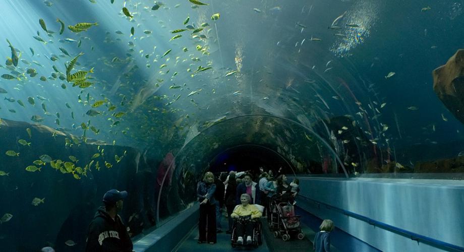 أكبر أحواض السمك العالم 3.jpg