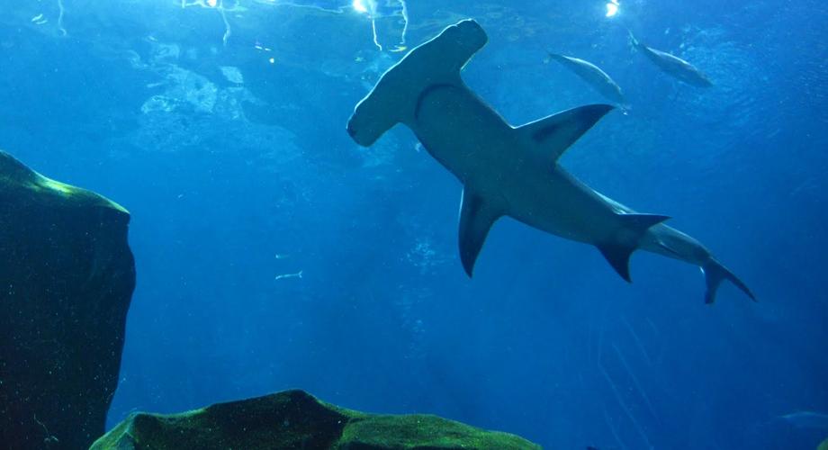 أكبر أحواض السمك العالم 7.jpg