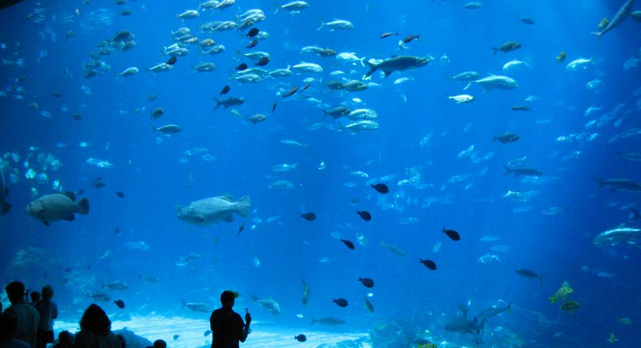 أكبر أحواض السمك العالم 8.jpg